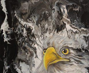 Adler – Blick